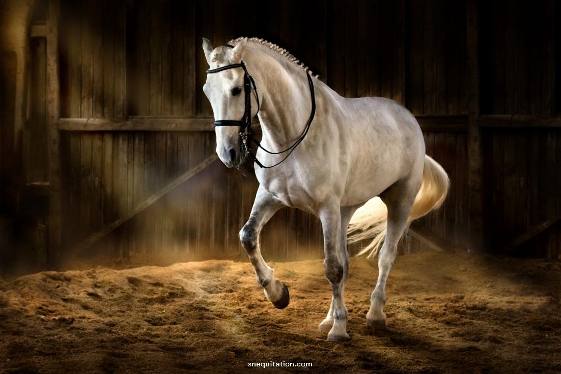 La castration du cheval : pourquoi et à quel âge ?