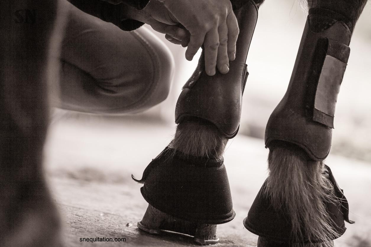 Comment et pourquoi mettre des guêtres à son cheval ?