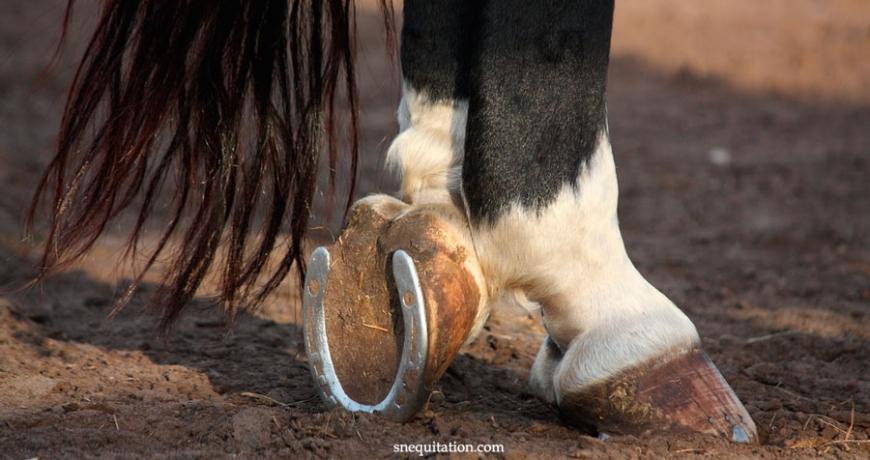 Pourquoi et comment ferrer un cheval