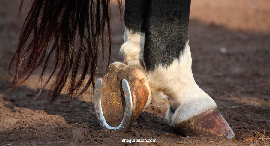 Pourquoi et comment ferrer un cheval ?