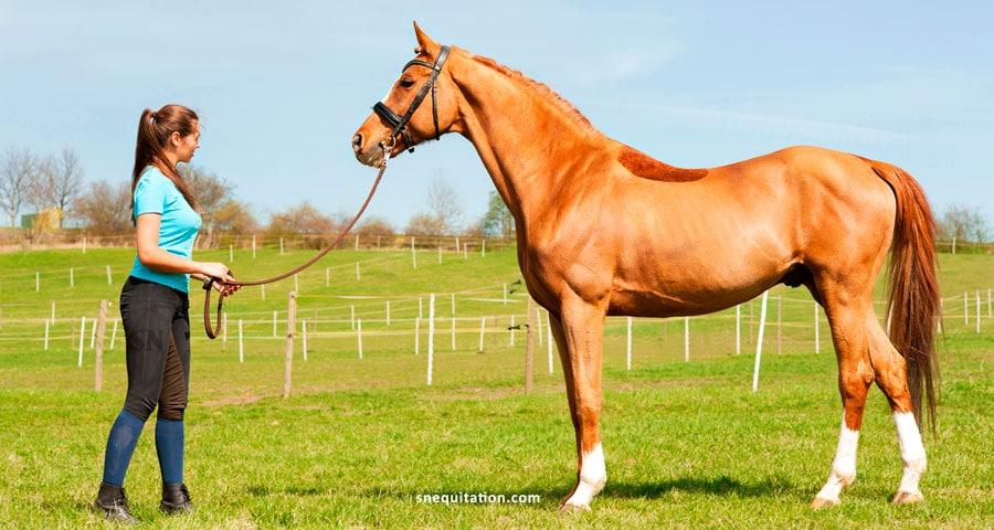 Comment débourrer et dresser un cheval ?