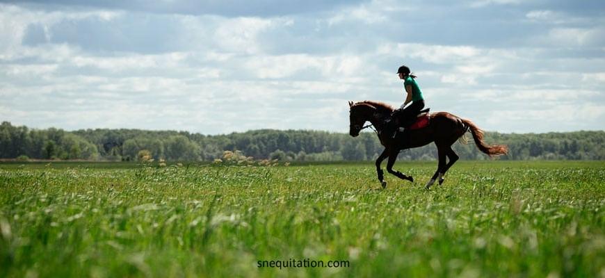 Parage du cheval