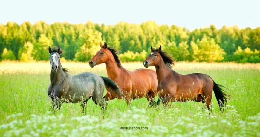 Gestion de mon cheval au pré