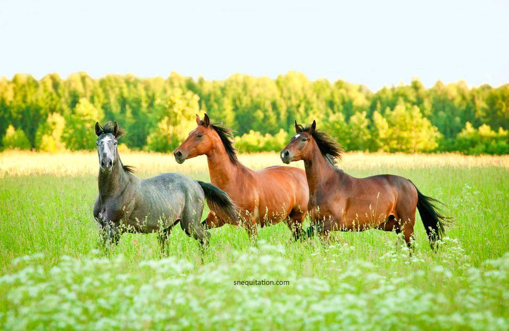 Gestion de mon cheval au pré : tous les conseils