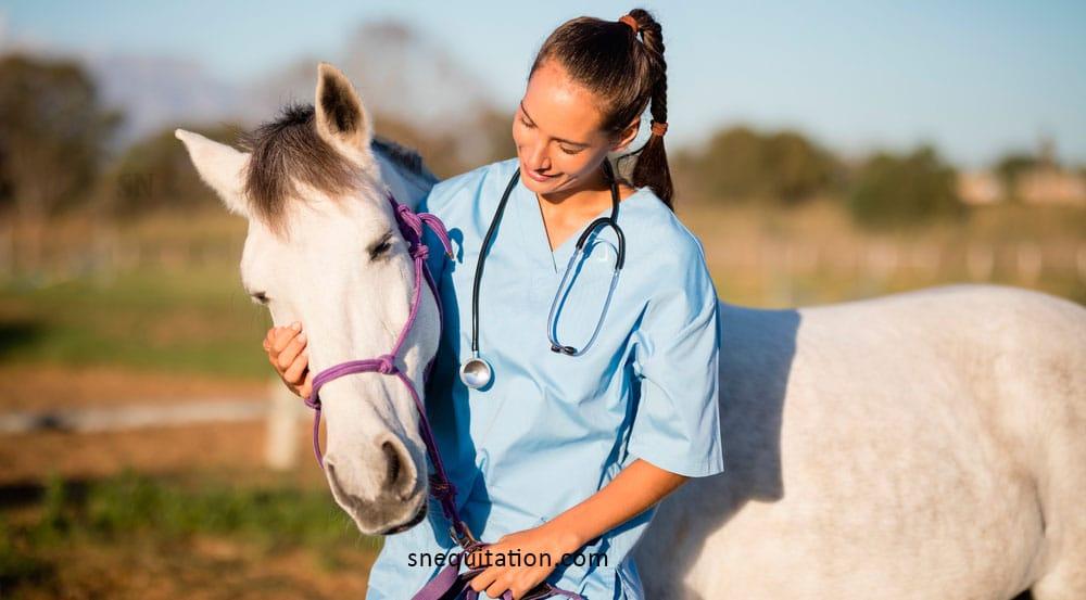 Tout savoir sur la vermifugation du cheval